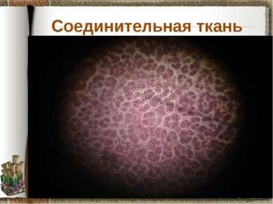 Соединительная ткань Задание: рассмотрите препарат крови лягушки, установите ...