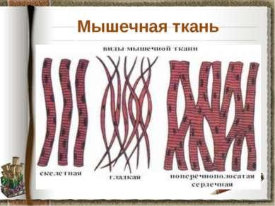 Мышечная ткань Задание: используя материал учебника на странице 30, установит...