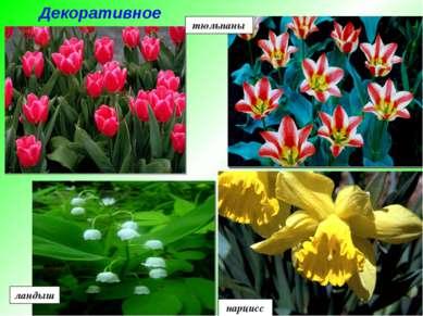 тюльпаны ландыш нарцисс Декоративное