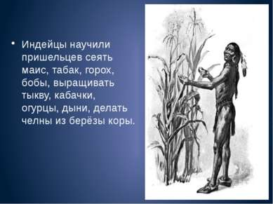 Индейцы научили пришельцев сеять маис, табак, горох, бобы, выращивать тыкву, ...