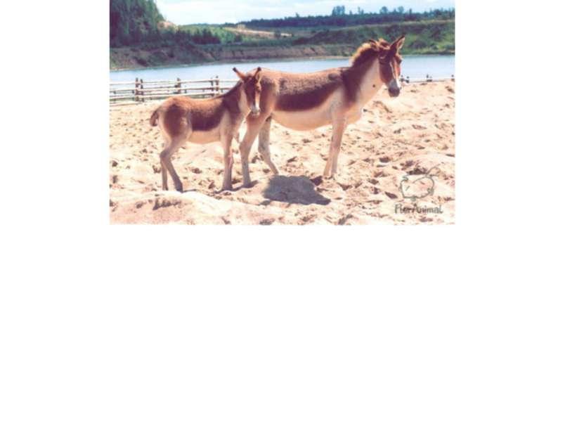 Детеныши животных Prezentacii.com