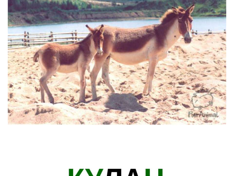 КУЛАН