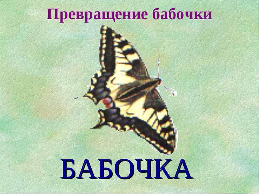 Превращение бабочки БАБОЧКА