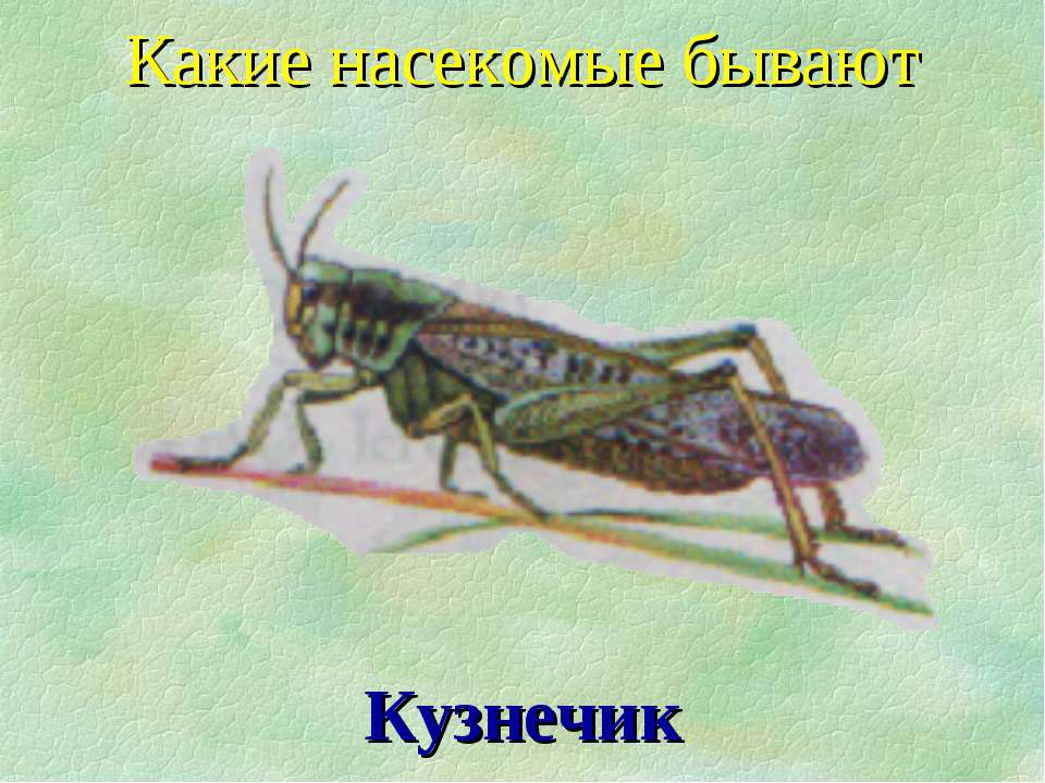 Кузнечик Какие насекомые бывают