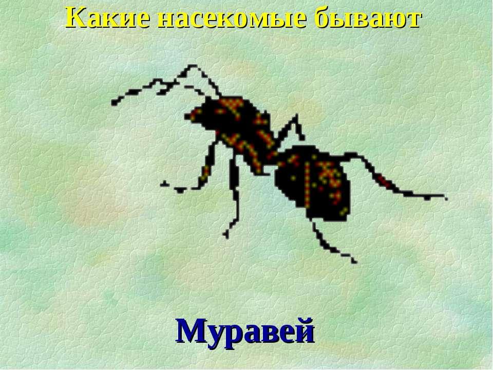 Муравей Какие насекомые бывают