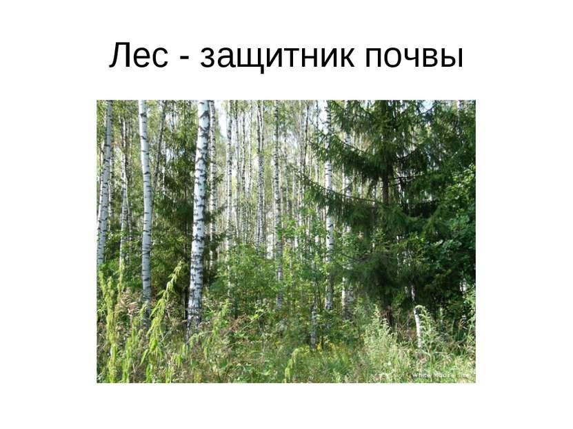 Лес - защитник почвы