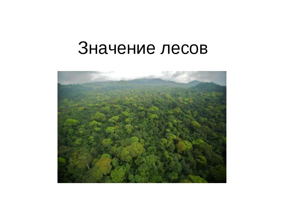 Значение лесов