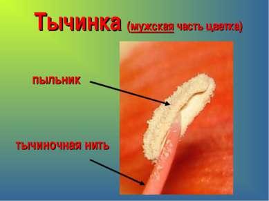 Тычинка (мужская часть цветка) пыльник тычиночная нить