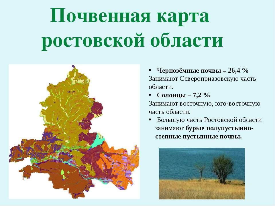 Почвенная карта ростовской области Чернозёмные почвы – 26,4 % Занимают Северо...