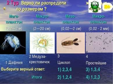 2 Тур Верно ли распредели животных по размерам ? Итоги