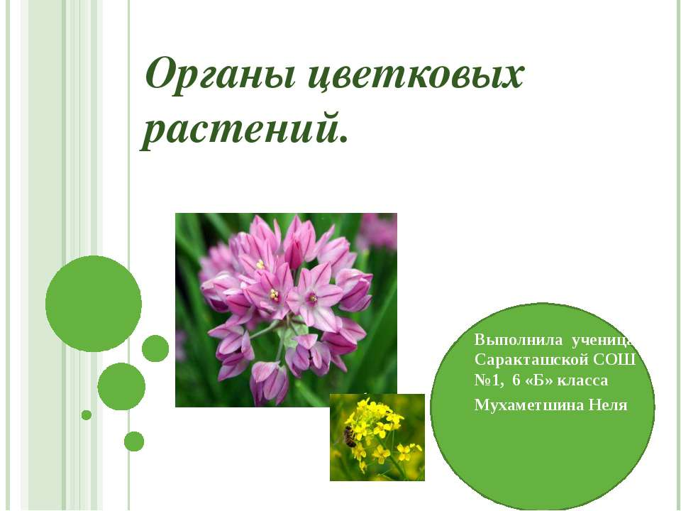 Органы цветковых растений. Выполнила ученица Саракташской СОШ №1, 6 «Б» класс...
