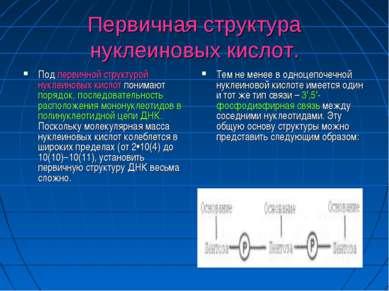 Первичная структура нуклеиновых кислот. Под первичной структурой нуклеиновых ...