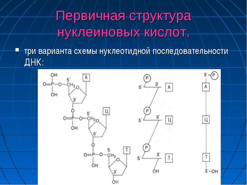 Первичная структура нуклеиновых кислот. три варианта схемы нуклеотидной после...