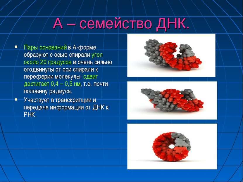 А – семейство ДНК. Пары оснований в А-форме образуют с осью спирали угол окол...