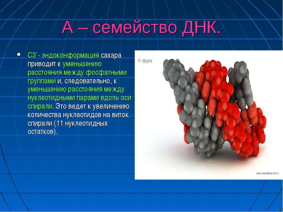 А – семейство ДНК. С3`- эндоконформация сахара приводит к уменьшению расстоян...