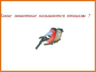Какие животные называются птицами ?