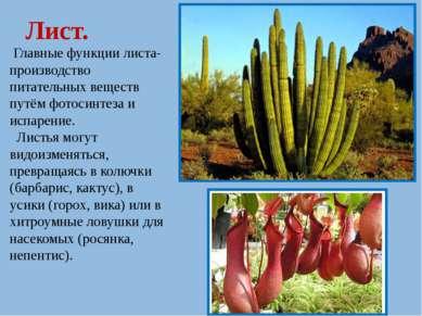 Лист. Главные функции листа- производство питательных веществ путём фотосинте...