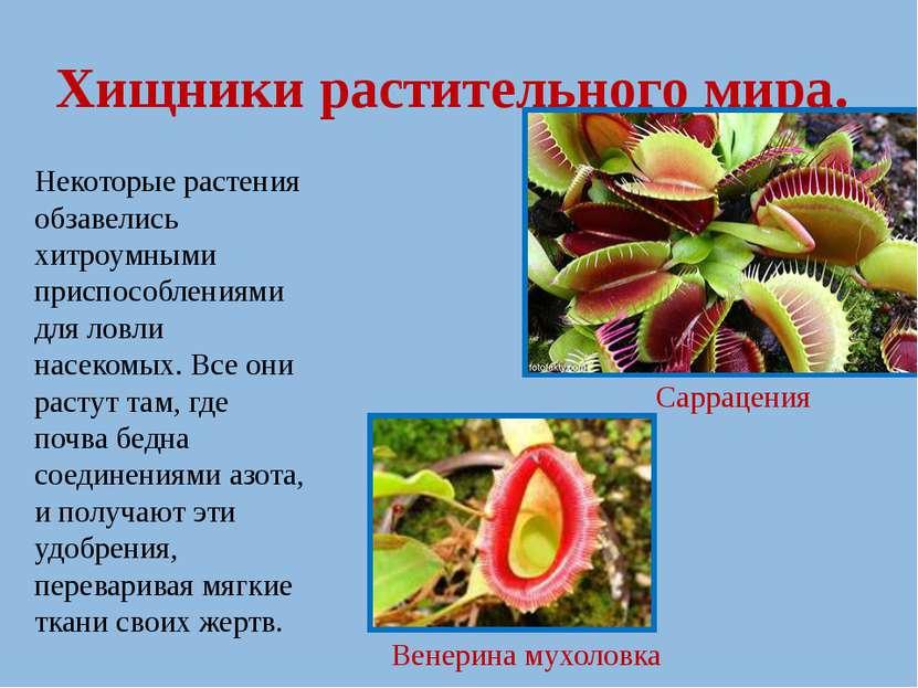 Хищники растительного мира. Некоторые растения обзавелись хитроумными приспос...