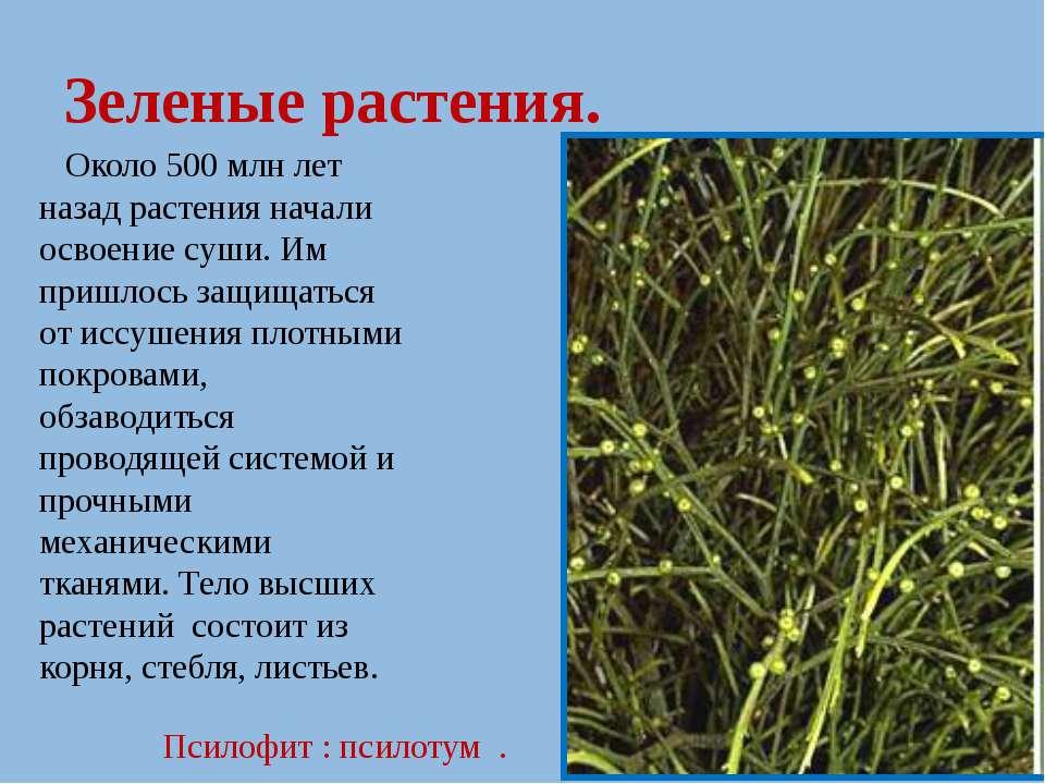 Зеленые растения. Около 500 млн лет назад растения начали освоение суши. Им п...