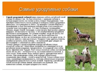 Самые уродливые собаки Самой уродливой собакой мира признан кобель китайской ...