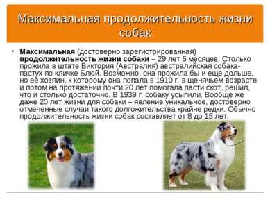 Максимальная продолжительность жизни собак Максимальная (достоверно зарегистр...