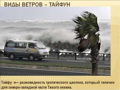 Тайфу н— разновидность тропического циклона, который типичен для северо-запад...