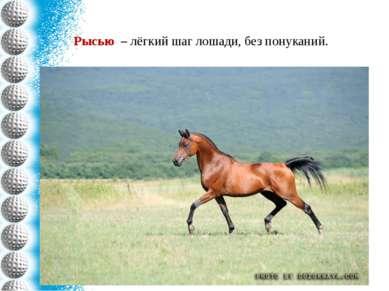 Рысью – лёгкий шаг лошади, без понуканий.