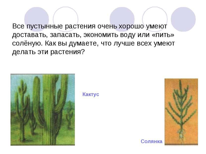 Все пустынные растения очень хорошо умеют доставать, запасать, экономить воду...