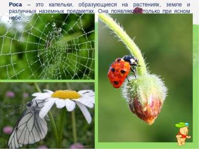Роса – это капельки, образующиеся на растениях, земле и различных наземных пр...