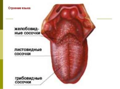 Строение языка