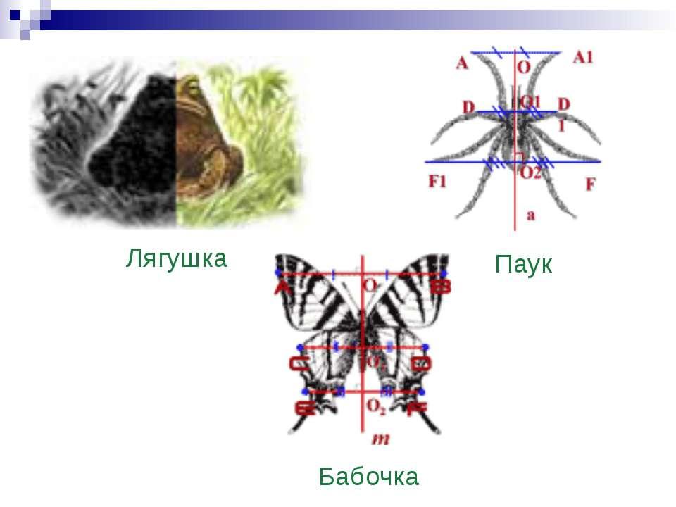 Лягушка Паук Бабочка