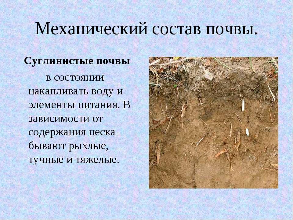 Механический состав почвы. Суглинистые почвы в состоянии накапливать воду и э...
