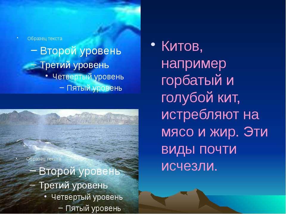 Китов, например горбатый и голубой кит, истребляют на мясо и жир. Эти виды по...