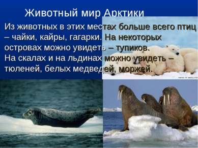 Животный мир Арктики Из животных в этих местах больше всего птиц – чайки, кай...