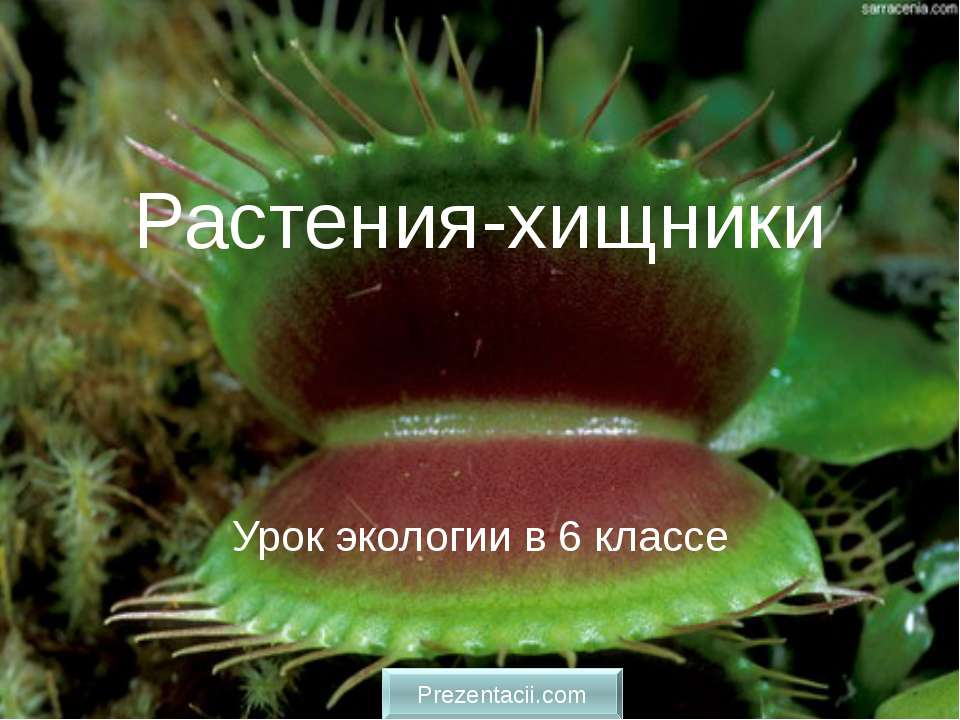 Растения-хищники Урок экологии в 6 классе