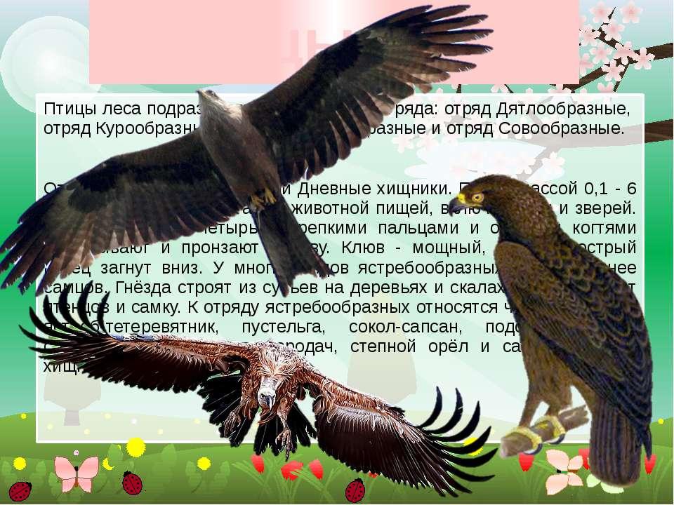 Птицы леса Птицы леса подразделяются на четыре отряда: отряд Дятлообразные, о...
