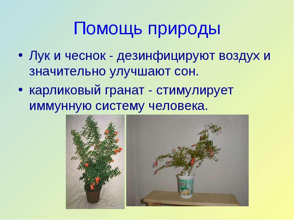 Помощь природы Лук и чеснок - дезинфицируют воздух и значительно улучшают сон...