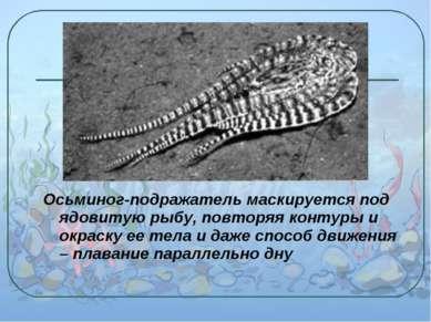 Осьминог-подражатель маскируется под ядовитую рыбу, повторяя контуры и окраск...