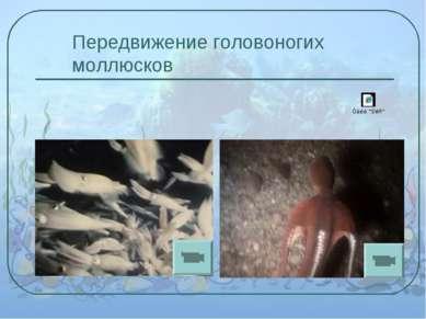 Передвижение головоногих моллюсков