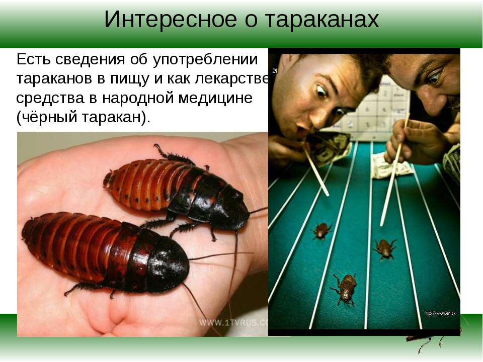 Интересное о тараканах Есть сведения об употреблении тараканов в пищу и как л...