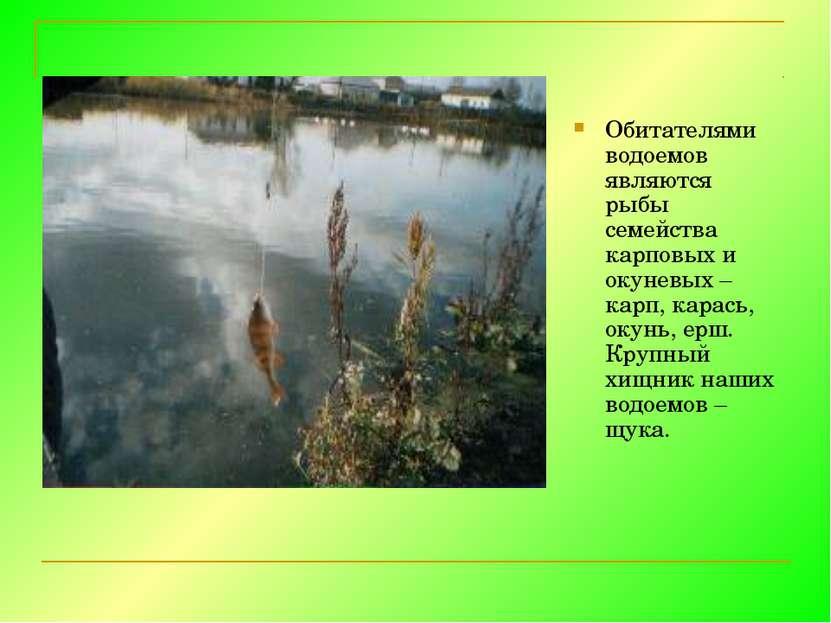 Обитателями водоемов являются рыбы семейства карповых и окуневых – карп, кара...