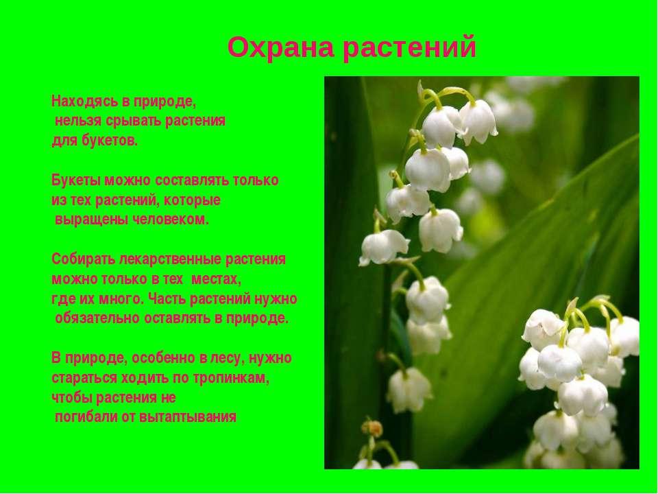 Охрана растений Находясь в природе, нельзя срывать растения для букетов. Буке...