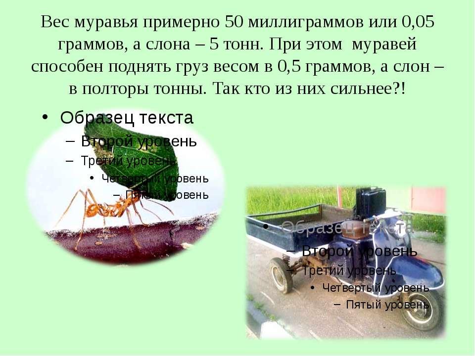 Вес муравья примерно 50 миллиграммов или 0,05 граммов, а слона – 5 тонн. При ...