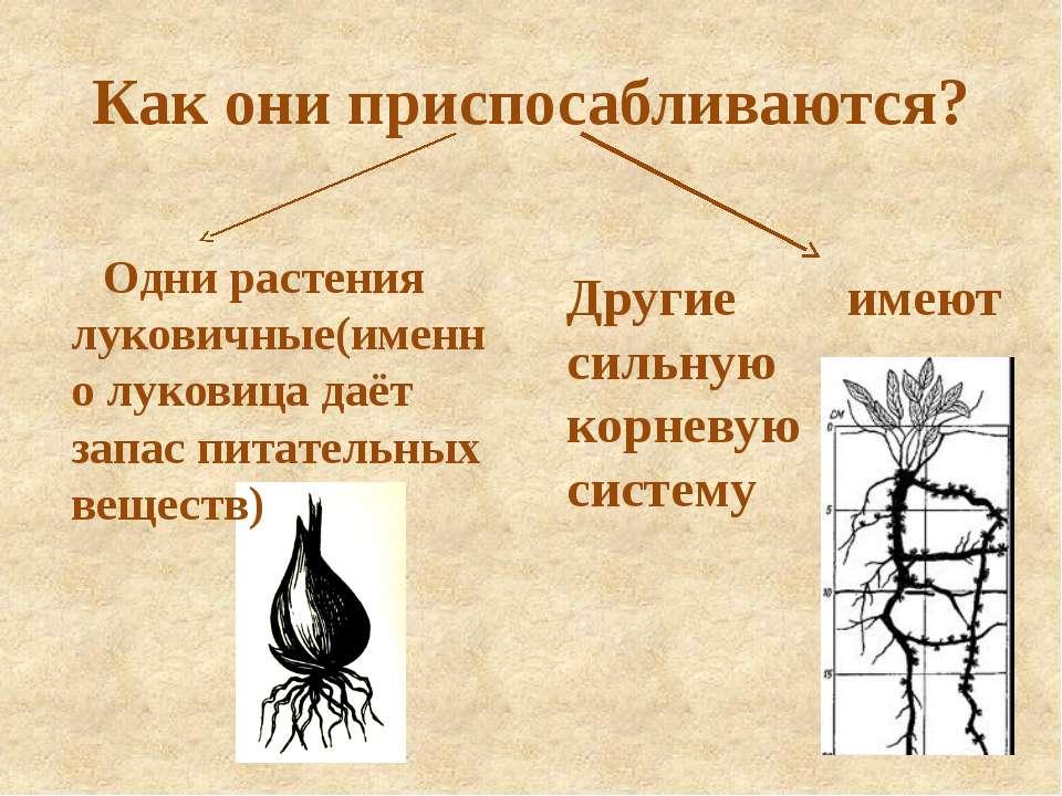 Как они приспосабливаются? Одни растения луковичные(именно луковица даёт запа...