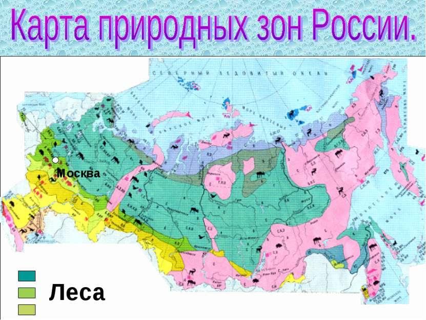 Москва Леса