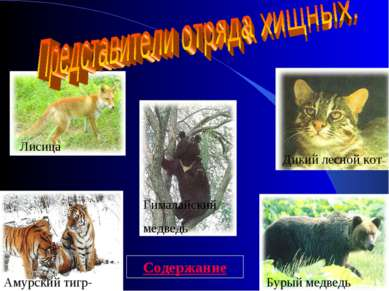 Амурский тигр- Бурый медведь Дикий лесной кот Лисица Гималайский медведь Соде...