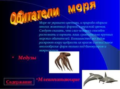 Медузы Млекопитающие Море не украшено цветами, и природа одарила многих живот...
