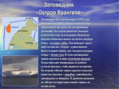Заповедник «Остров Врангеля» Заповедник был организован в 1976 году. Через ве...