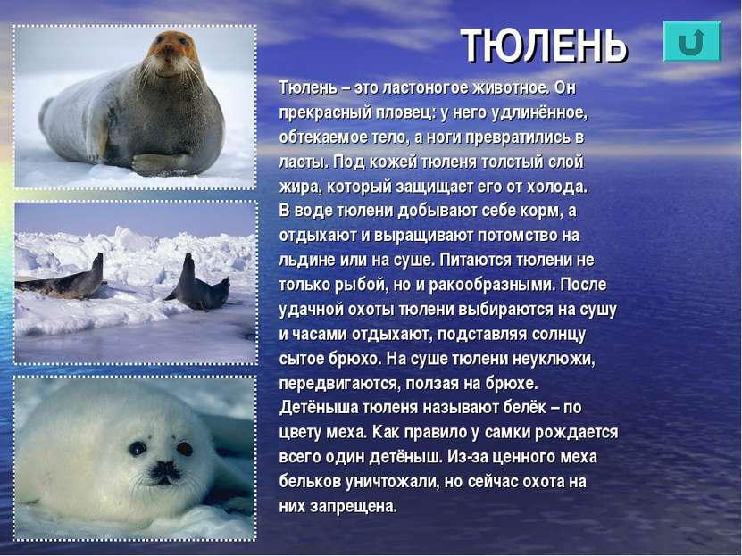 ТЮЛЕНЬ Тюлень – это ластоногое животное. Он прекрасный пловец: у него удлинён...