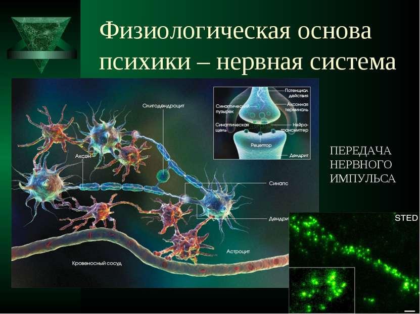 Физиологическая основа психики – нервная система ПЕРЕДАЧА НЕРВНОГО ИМПУЛЬСА